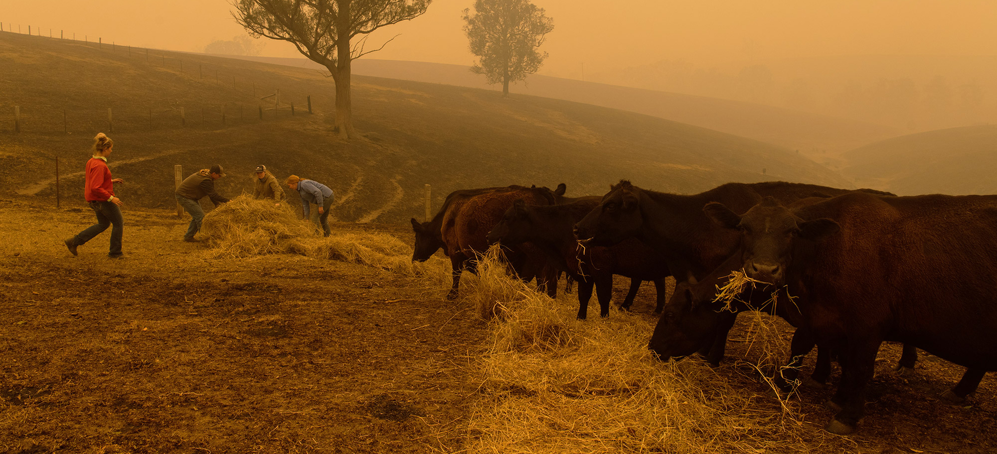 Australia's Bushfire Crisis – Implications For Dairy Product Availability